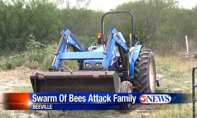 bees.jpg  bees attack family http://www.kiiitv.com/story/25656043/large-swarm-of-bees-attacks-family-in-beeville